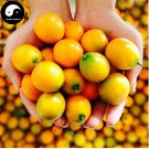 Buy Mini Orange Fruit Seeds 120pcs Plant Fortunella Margarita For Fruit Orange