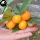 Buy Mini Orange Fruit Seeds 60pcs Plant Fortunella Margarita For Fruit Orange