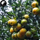 Buy Lu Orange Fruit Seeds 240pcs Plant Citrus Tree For Fruit Sweet Orange Lu Gan