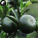 Buy Lu Orange Fruit Seeds 60pcs Plant Citrus Tree For Fruit Sweet Orange Lu Gan