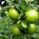 Buy Gong Orange Fruit Seeds 240pcs Plant Citrus Tree For Fruit Sweet Orange