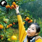 Buy Gong Orange Fruit Seeds 120pcs Plant Citrus Tree For Fruit Sweet Orange