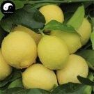 Buy Citrus Limon Fruit Seeds 160pcs Plant Lemon Orange Tree For Fruit Ning Meng