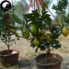 Buy Citrus Limon Fruit Seeds 40pcs Plant Lemon Orange Tree For Fruit Ning Meng