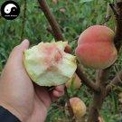Buy Peach Fruit Seeds 20pcs Plant Prunus Persica Tree For Fruit Shui Mi Tao