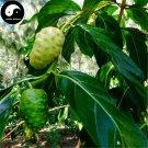 Buy Noni Fruit Seeds 200pcs Plant Morinda Citrifolia For Fruit Nhan Nuo Li