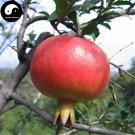 Buy Pomegranate Fruit Tree Seeds 60pcs Plant Punica Granatum For Berry Fruit