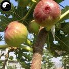 Buy Ficus Carica Fruit Tree Seeds 120pcs Plant Fruit Figs For Fruit Ficus Carica