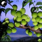 Buy Sour Vatica Fruit Tree Seeds 30pcs Plant Fruit Vatica For Qing Mei Fruit