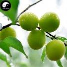 Buy Sour Vatica Fruit Tree Seeds 15pcs Plant Fruit Vatica For Qing Mei Fruit