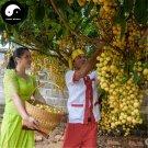 Buy Baccaurea Ramiflora Fruit Tree Seeds 60pcs Plant Baccaurea Ramiflora Tree