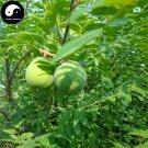 Buy Xanthoceras Tree Seeds 60pcs Plant Xanthoceras Sorbifolium For Wen Guan