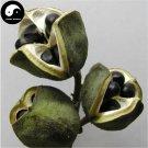 Buy Xanthoceras Tree Seeds 120pcs Plant Xanthoceras Sorbifolium For Wen Guan