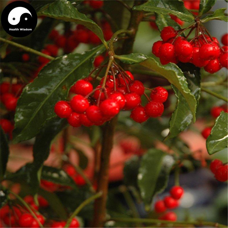 Buy Hosiei Tree Seeds 100pcs Plant Ormosia Hosiei For Chinese Red Bean Tree