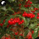 Buy Hosiei Tree Seeds 50pcs Plant Ormosia Hosiei For Chinese Red Bean Tree