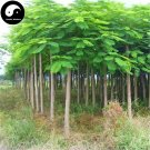 Buy Delonix Regia Tree Seeds 20pcs Plant Peacacock Flower For Phoenix Wood