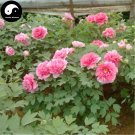 Buy Peony Tree Seeds 120pcs Plant Paeonia For Chinese Flower King Mu Dan