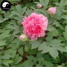Buy Peony Tree Seeds 60pcs Plant Paeonia For Chinese Flower King Mu Dan