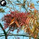 Buy Chinese Lacquer Tree Seeds 200pcs Plant Toxicodendron Vernicifluum Tree Qi Shu