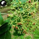Buy Evodia Tree Seeds 100pcs Plant Evodia Daniellii Tree Chou Tan For Wu Zhu Yu