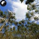 Buy Eucalyptus Tree Seeds 400pcs Plant Eucalyptus Robusta Smith Chinese An Shu