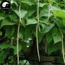 Buy Ovate Catalpa Tree Seeds 120pcs Plant China Catalpa Tree For Chinese Zi Shu