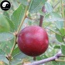 Buy Choerospondias Axillaris Tree Seeds 10pcs Plant Chinese Nan Suan Zao Tree