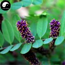 Buy False Indigo Bush Tree Seeds 60pcs Plant Amorpha Fruticosa Tree Zi Sui Huai