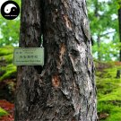 Buy Larix Gmelinii Tree Seeds 100pcs Plant Larch Pine China Pinaster Luo Ye Song