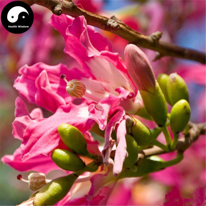 Buy Floss-silk Tree Seeds 50pcs Plant Ceiba Insignis Tree Chinese Beauty Tree