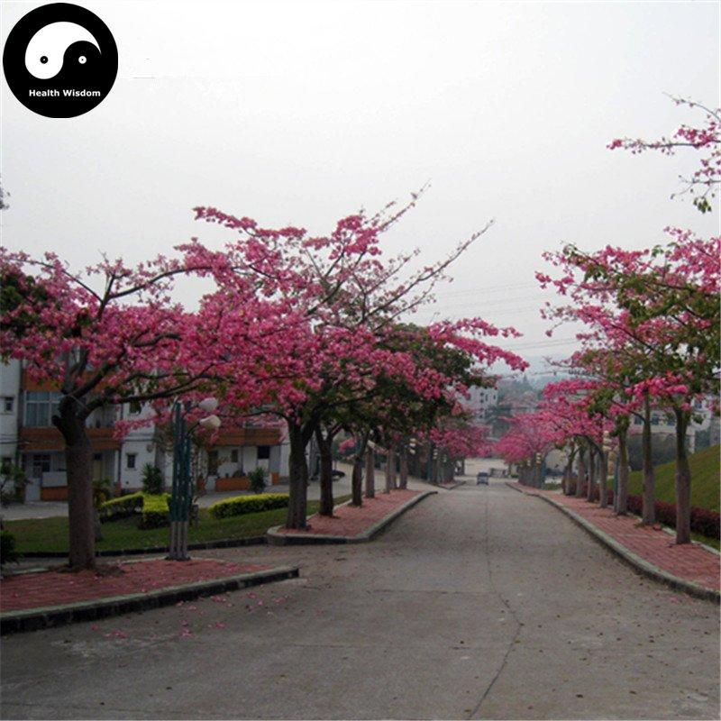 Buy Floss-silk Tree Seeds 200pcs Plant Ceiba Insignis Tree Chinese Beauty Tree