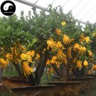 Buy Citrus Medica Sarcodactylis Tree Seeds 120pcs Plant Citron Bergamot Tree