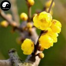 Buy Winter Sweet Prunus Mume Tree Seeds 60pcs Plant Yellow Plum Blossom La Mei