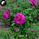 Buy Red Thorn Rosa Rugosa Tree Seeds 120pcs Plant Rosa Multifloravar Ci Mei