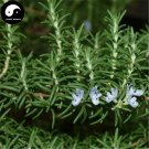 Buy Rosmarinus Officinalis Tree Seeds 15pcs Plant Rosemary Tree Mi Die Xiang