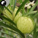 Buy Asclepias Fruticosa Tree Seeds 30pcs Plant Qi Qiu Guo Bonsai