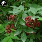 Buy Sambucus Williamsii Tree Seeds 120pcs Plant Williams Elder Tree Jie Gu Mu