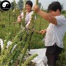 Buy Semen Sesami Nigrum Seeds 1200pcs Plant Chinese Black Sesame Seed Hei Zhi Ma