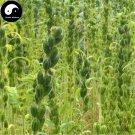Buy Semen Sesami Nigrum Seeds 600pcs Plant Chinese Black Sesame Seed Hei Zhi Ma
