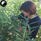 Buy Sesamum Indicum Seeds 1200pcs Plant Chinese White Sesame Seed Bai Zhi Ma