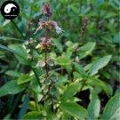 Buy Ocimum Basilcum Seeds 800pcs Plant Chinese Basil Seed Lan Xiang Zi