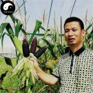 Buy Purple Waxy Corn Seeds 240pcs Plant Chinese Sweet Zea Mays For Balck Corn