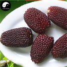 Buy Berry Waxy Corn Seeds 120pcs Plant Chinese Sweet Zea Mays For Fruit Corn