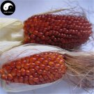 Buy Berry Waxy Corn Seeds 60pcs Plant Chinese Sweet Zea Mays For Fruit Corn