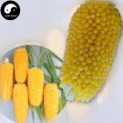 Buy Pineapple Waxy Corn Seeds 240pcs Plant Chinese Sweet Zea Mays For Fruit Corn