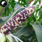 Buy Color Waxy Corn Seeds 120pcs Plant Chinese Sweet Zea Mays For Fruit Corn