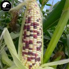 Buy Color Waxy Corn Seeds 60pcs Plant Chinese Sweet Zea Mays For Fruit Corn