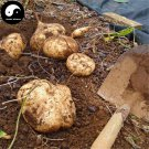 Buy Leguminosae Seeds 30pcs Plant Ipomoea Batatas Food Sweet Potatoes