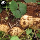 Buy Leguminosae Seeds 60pcs Plant Ipomoea Batatas Food Sweet Potatoes