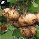 Buy Leguminosae Seeds 120pcs Plant Ipomoea Batatas Food Sweet Potatoes